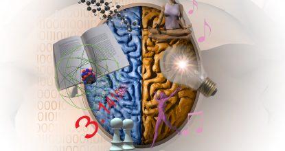 Ваше ведущее полушарие мозга (тест-практикум)